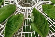WILD HERBS and herbs / Yrtit, yrttien hyödyntäminen, ruokaohjeita ym...