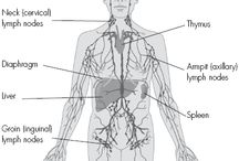 Lymphatic Drainage ed / Image of the Lymphatic system