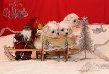 Weihnachten / neue bilder von unserer kleinen maltigang und wir denken schon an das weihnachtesfest was ja kurz vor der tür steht.