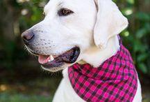 Pink Dog Bandanas