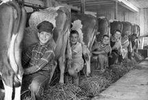 Leven, wonen, werken op de boerderij