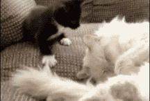 Funniest cats GIF