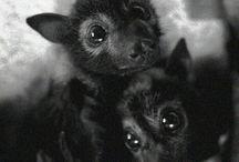BATS / by Kim Wenth