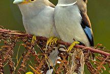 Birdy / by Genteel