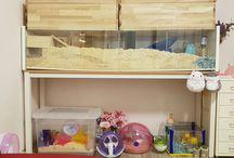 산로마을 햄스터 / sanro town hamster
