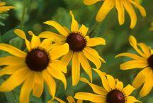 Képek növényimádóknak! / A legszebb fotók kertkedvelők, dísznövényeket, kerti dekorációt szeretők számára.