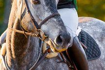 Horse - Легкоупряжные лошади / Рысаки, теплокровные породы и помеси, пригодные для запряжки в кареты и сани