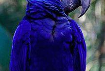 Pássaros♡