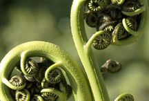 Golden Fractals / Fibonacci in Nature