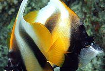 Мир рыб