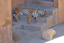 Zany Zoos
