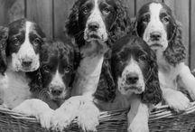 Must Love Dogs / by Josie Hammond