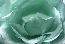 Flowers / by Corrine Elizabeth