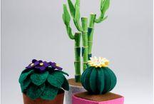 Cactusgj