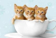 The Cat Cafe' - Novel / Cats and inspiration