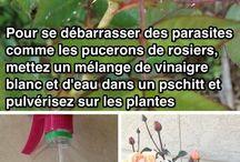 Soins plantes