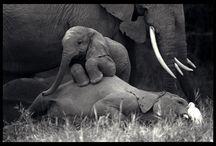 Elephants. / ...my favourite animal. / by Su-B