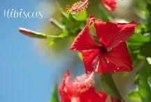 Florals of Barbados