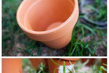 La main verte / gardening