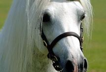 Horses :3