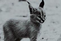 Cute animals / by Lydia Monio