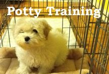 potty training a pup