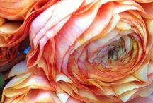 photografie fleurs/ bloemen fotografie/ flowers photografy