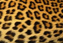 Leopard print my fave ❤️ / Leopard lover ♥️♥️