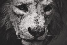 Creature Feature / by Alex Cruz