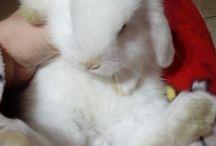 Susy / La mia coniglietta