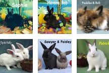 We Care for Exotic Pets / Rabbits, ferrets, guinea pigs, birds, reptiles...