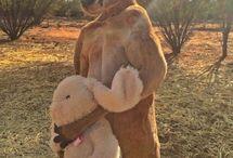 kangaroo|ω・`)
