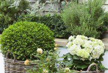 Сад+дом