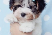 cute animals..*