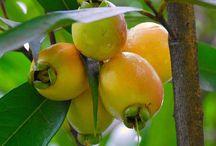 Frutas recuerdo de mi niñez