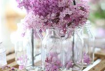 Lilac Love