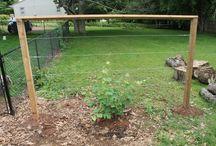 Backyard Fruit tree / veg garden