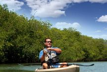 Kayak Review