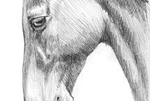 konie portrety