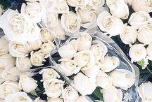 |• ROSES •|