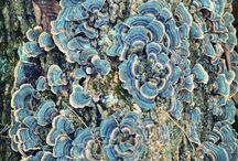 Mushrooms molds fungi lichens