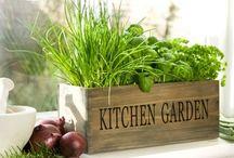 windowsill herbs