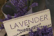 Lavender lilac purple moave