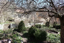 Bortglömda trädgårdar