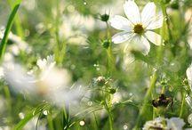 Fleurs / Petits bonheurs