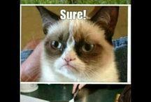 Grumpy cat rocks!