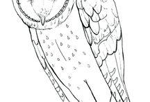 uilen kleurplaten