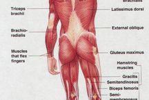 Estudos de anatomia