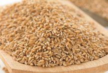 Emmer / All about our Bluebird Grain Farms Signature Organic Emmer Farro!