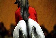 Horses / by P F. P.